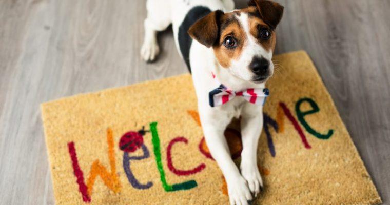 Mascotas bienvenidas: alojamientos petfriendly