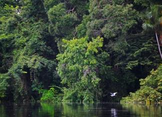 Amazônia e sua exuberância
