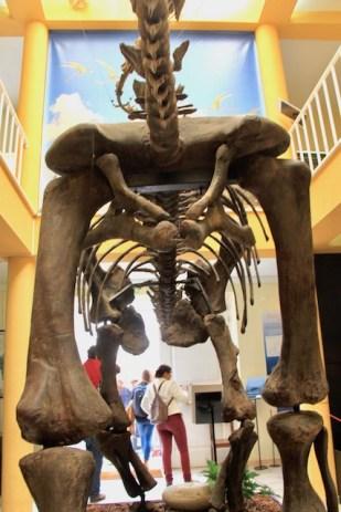 museu da lourinha ossos
