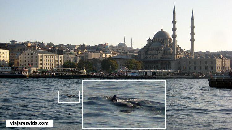 Delfines en el Bósforo en Estambul