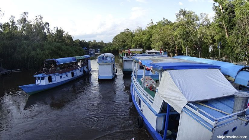 Klotoks haciendo la ruta del río Sekonyer