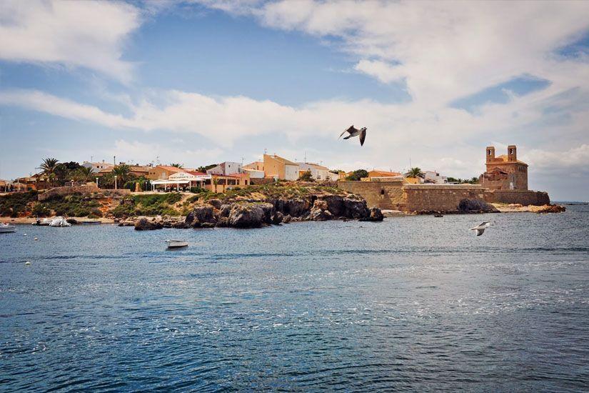 Gaviotas sobrevolando Nueva Tabarca