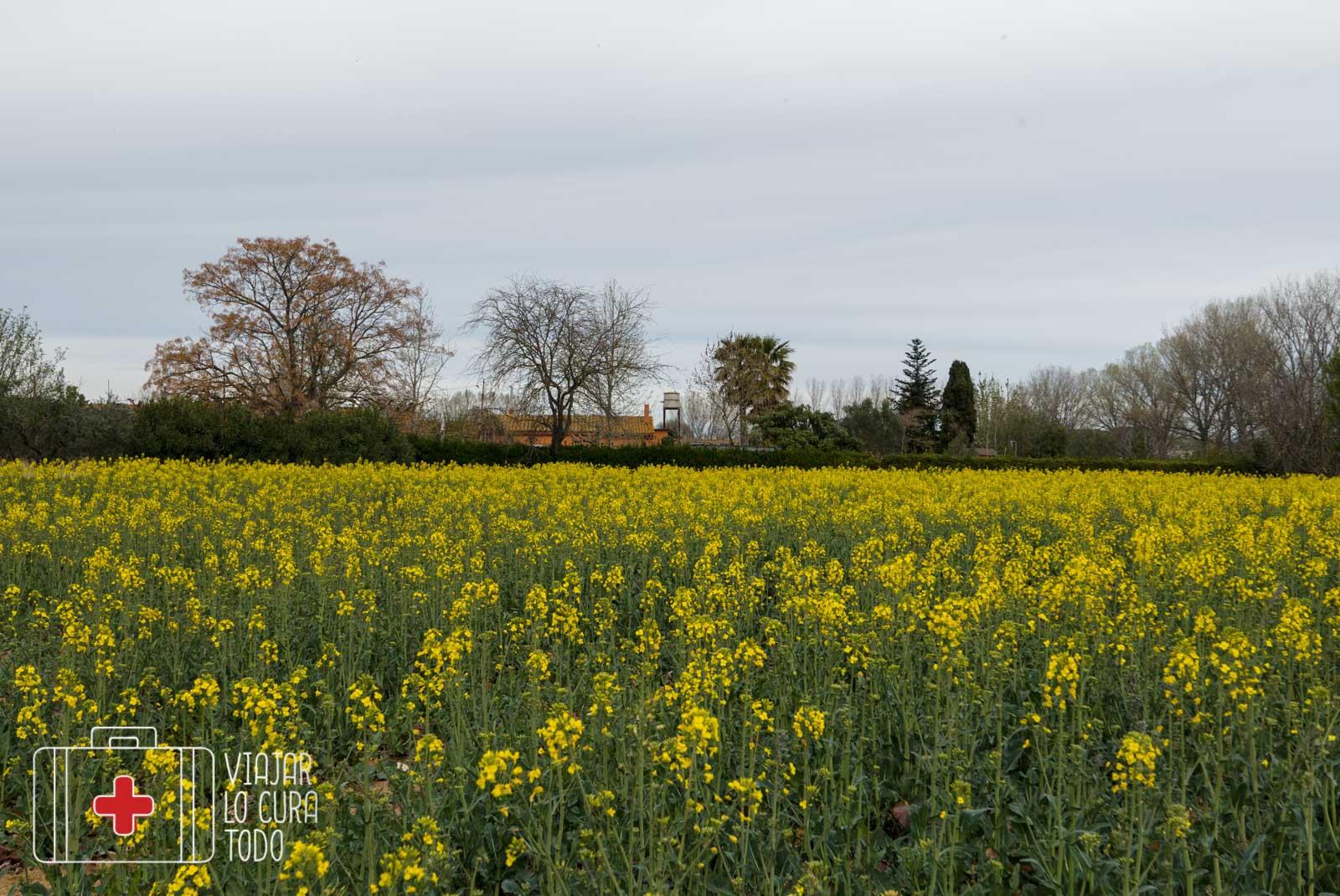 Campos floridos a la entrada de Vulpellac