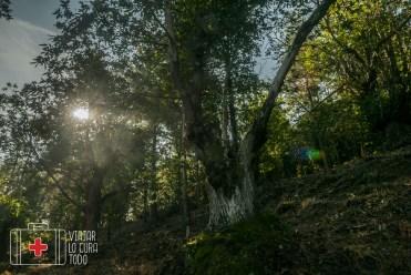 Bosque de castaños escondidos