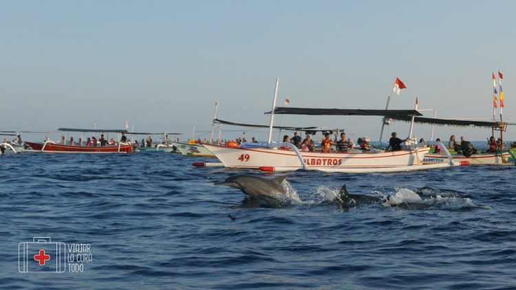 barcas rodeando a un grupo de delfines