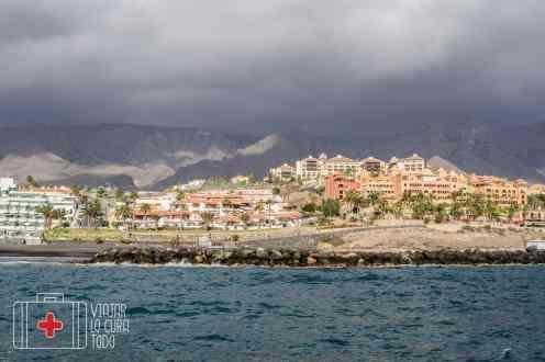 excursión salida delfines Tenerife
