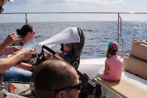 excursión delfines tenerife