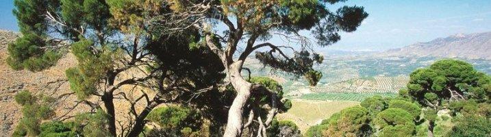 Conociendo el Pinar de Cánava (Jimena)
