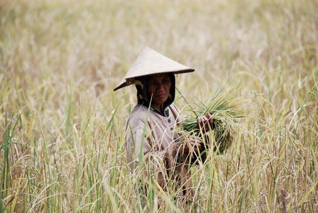 indonesia-por-libre2