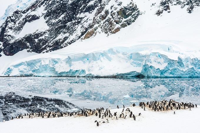 antarctica_penguins_0