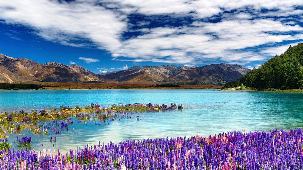 Lake-Tekapo-Amazing
