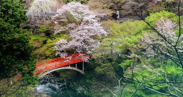 Los rincones de Kioto que no están en las guías turísticas