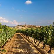 Cómo hacer turismo de enología en La Rioja