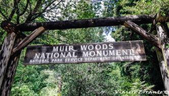 Muir Woods, el parque de secuoyas en San Francisco.