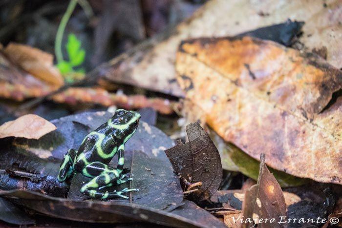 que ver en Costa Rica, Manuel Antonio