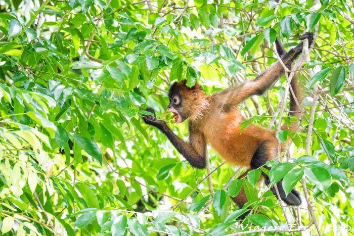 que ver en Costa Rica, Tortuguero