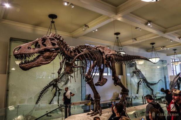 Milán: Museo Cívico de Historia Natural de Milán – Mi Contenido ...
