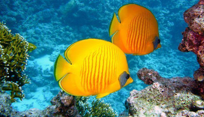 Viajes de Novios Maldivas Peces