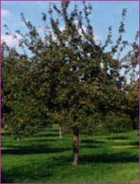 El Manzano