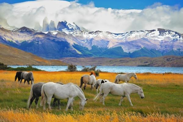 Parque Torres del Paine: alta temporada passa a exigir reserva
