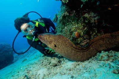 microsegmento turismo subacuático