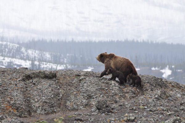 Cómo visitar los géiseres de Yellowstone National Park