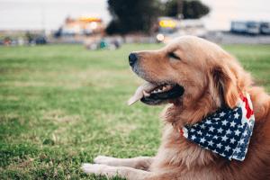 Viajes a USA con tu perro
