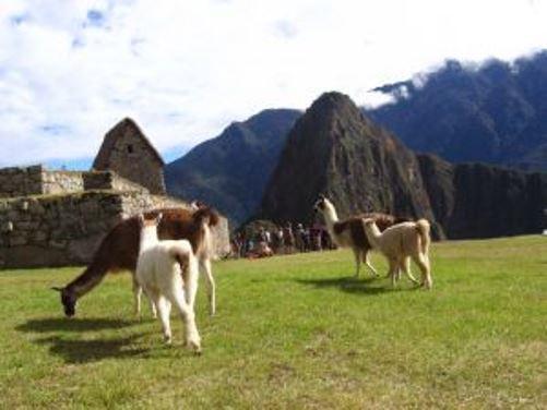 pasear en América del Sur