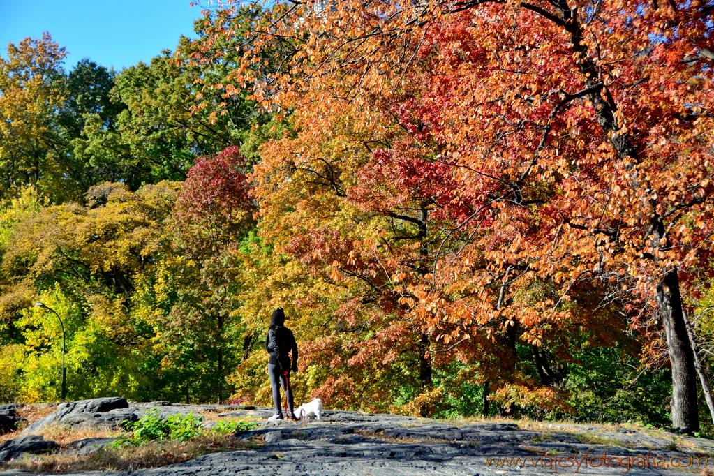 Nueva York Central Park 5