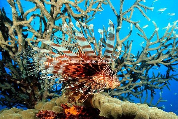 Peces de Fiji