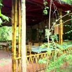 Hotel Arbol en la India