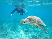 snorkel-okinawa