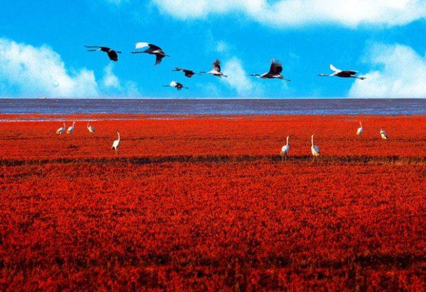 Red-Sea beach