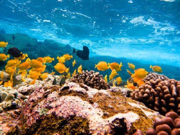 Submarinismo en hawaii (Foto: Sean Munding)