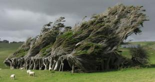 Los árboles de Punta Slope