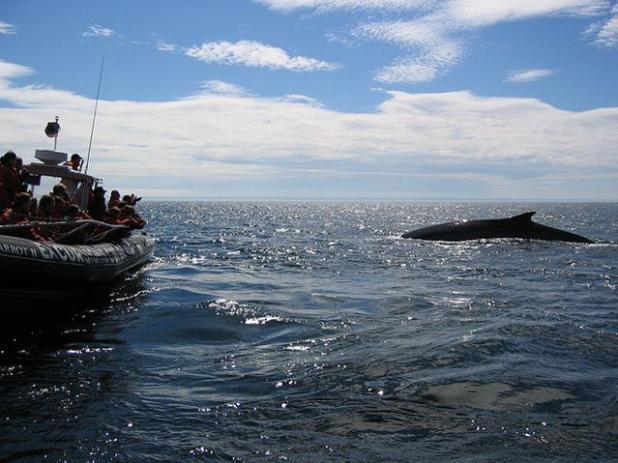 Golfo de San Lorenzo, Canadá