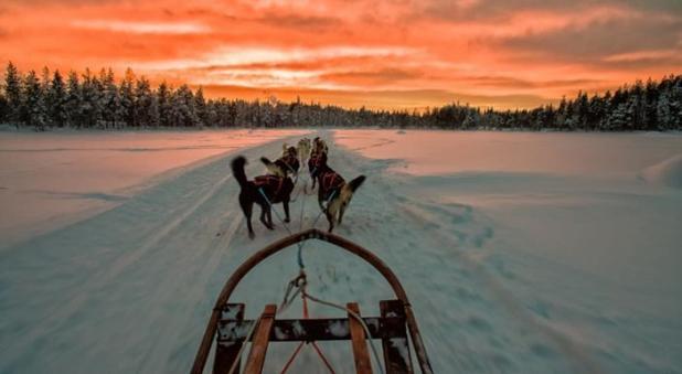 excursión en trineo tirado por huskies en Laponia, Suecia