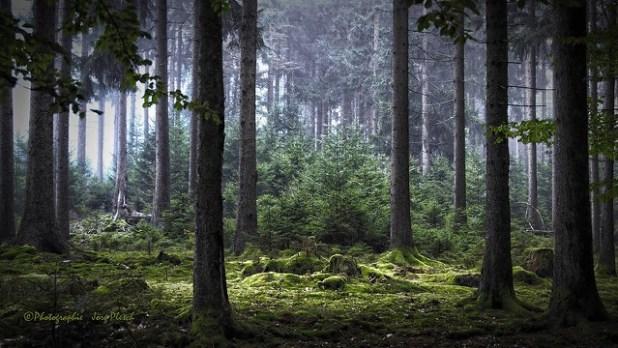 Zauberwald (Bosque-encantado)