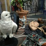 Hedwig el ave de Harry Potter