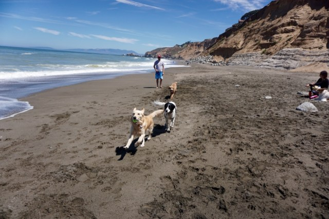 esplanade-beach-dog-friendly-california9