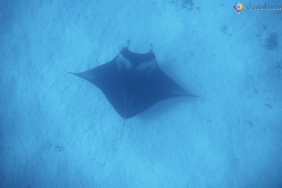 Manta Ray em Bora Bora