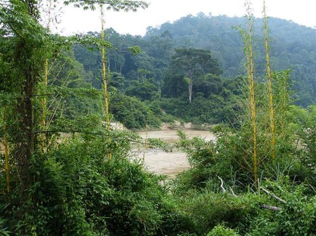 Parque Nacional Taman Negara