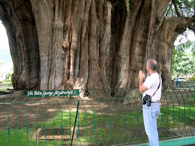 Mark Bonta prays to the Tule tree