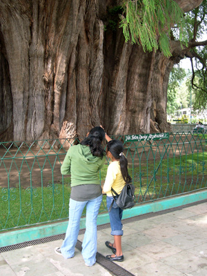 Tule tree with tourists