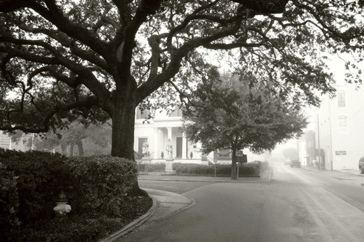 foggy park-like area in Savanna, Georgia