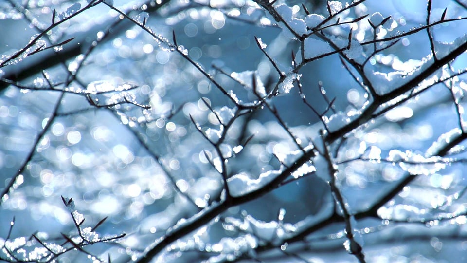 "Still from ""7 March"" showing snow on branches."