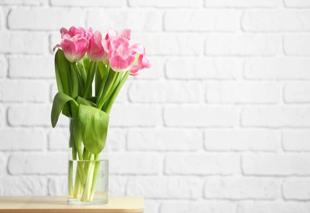 Vase with beautiful tulips against white brick wallpaper