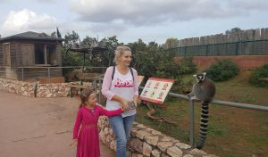 Lemuri in Gradina zoologica Atena in saptamana 15 de sarcina