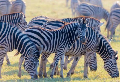 Blog | África, uno de los continentes más fascinantes del planeta