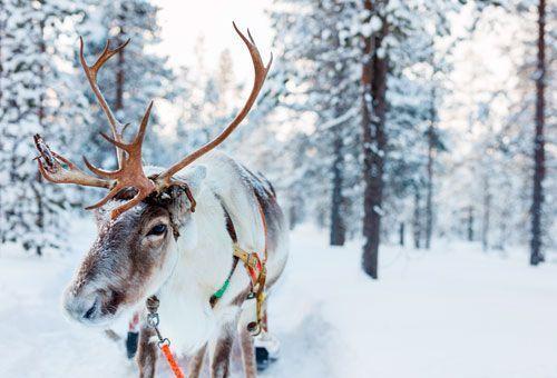 Viaje Laponia - Puente de Diciembre en Saariselkä